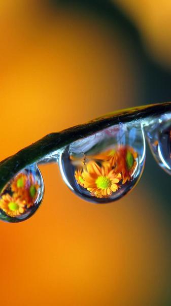 Flowers in drops