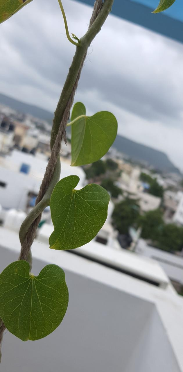 Urban leaves