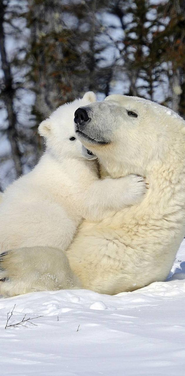 Babymoms polar bear