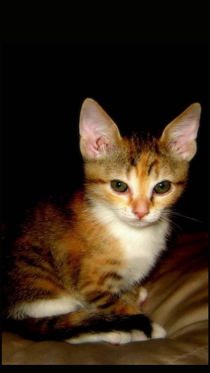 Kitten Buzz