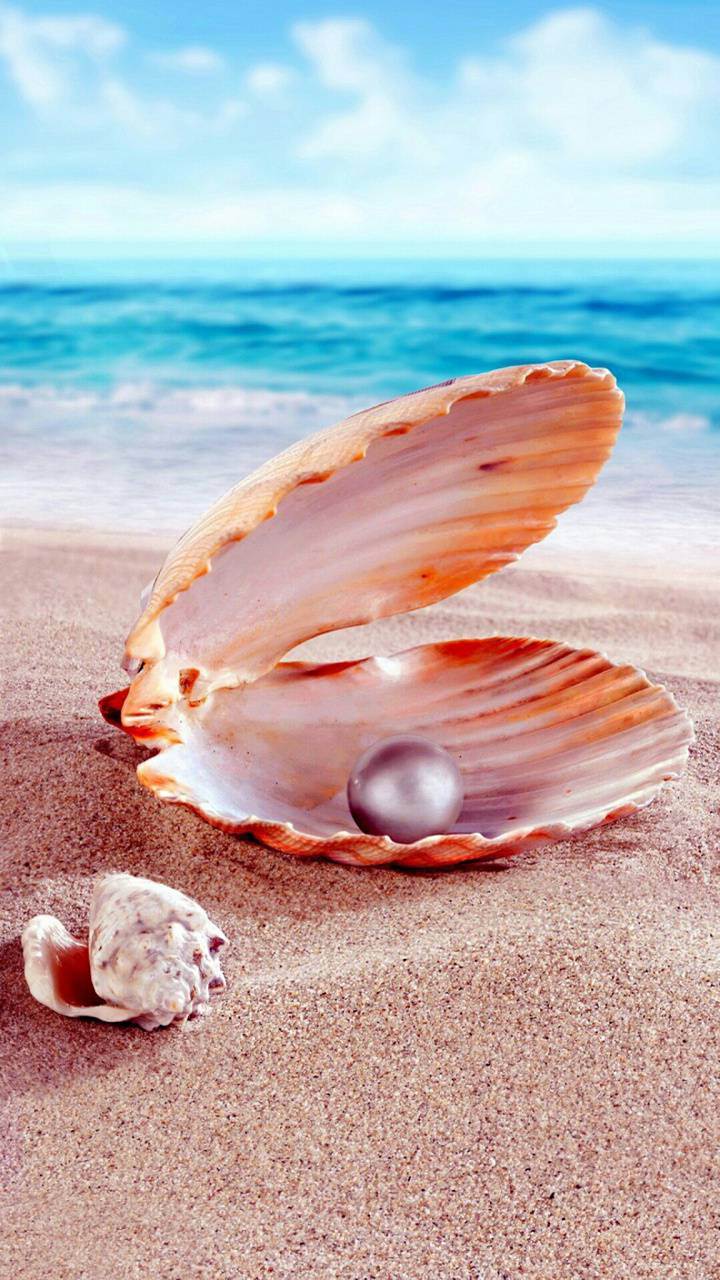 shell and pearl wallpaper by georgekev - 2b - Free on ZEDGE™