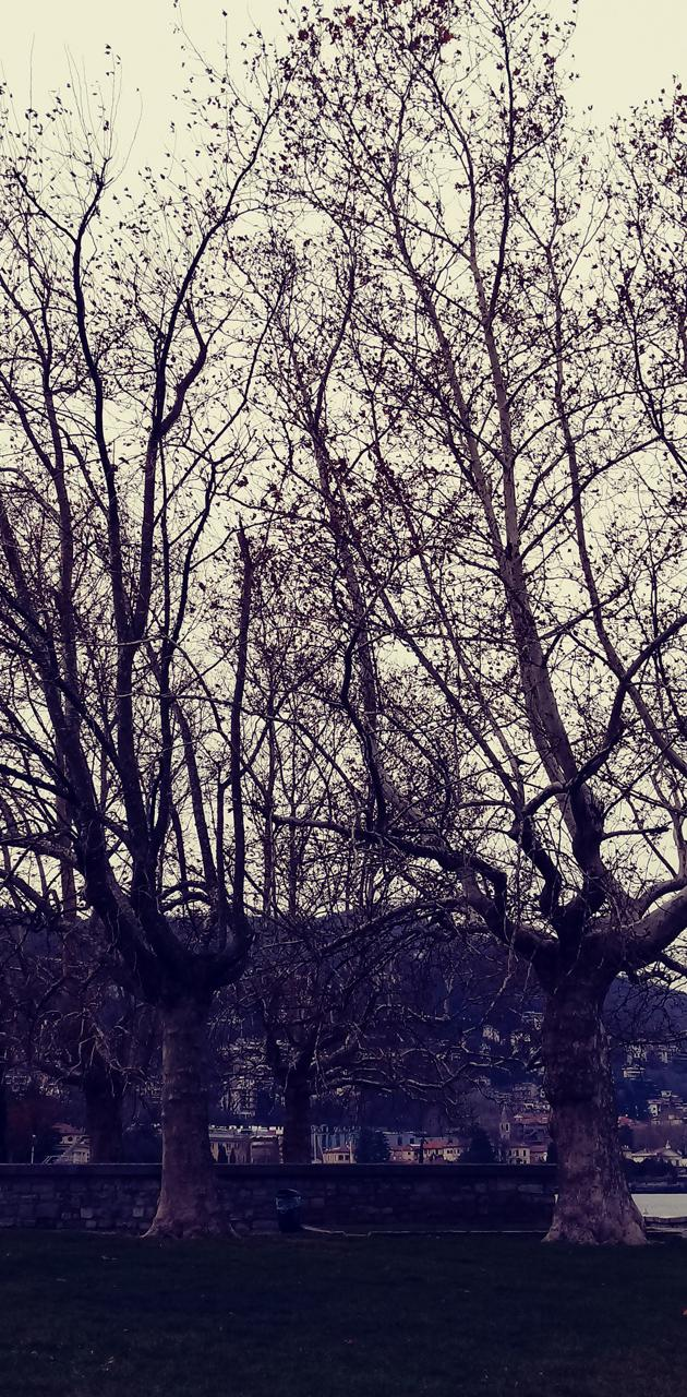 Couples tree