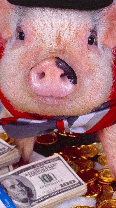 Hey Pig Spender
