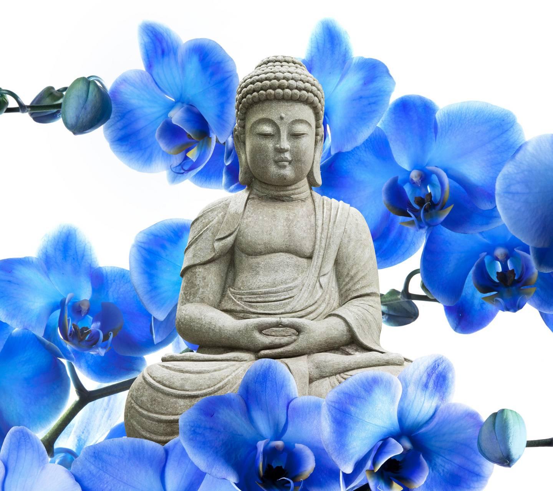 Orchid Buddha