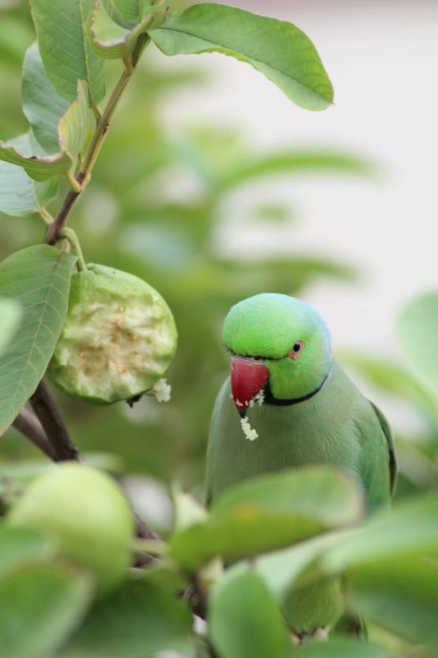 Parrot Love