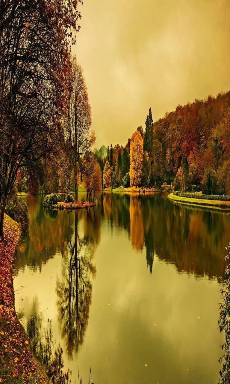 Lake autumn trees