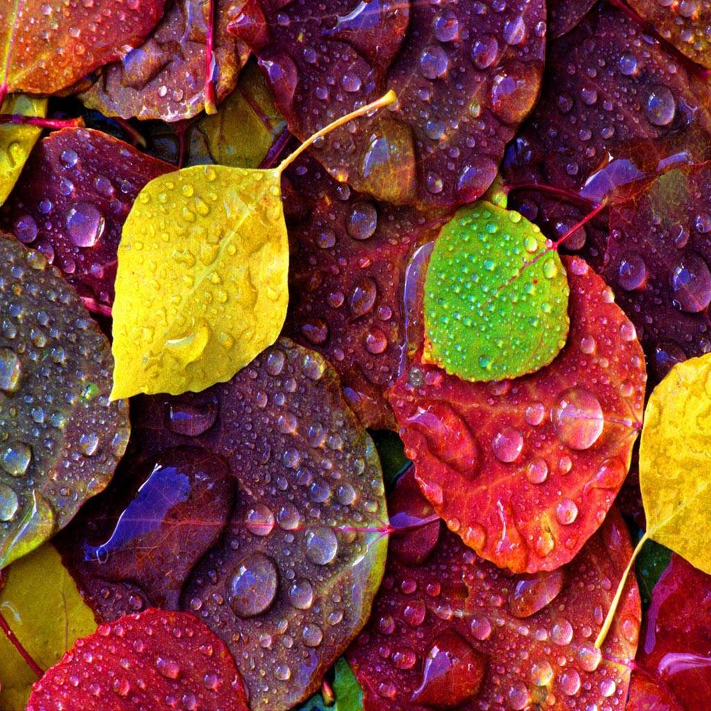 Dew On Colorful Leaf