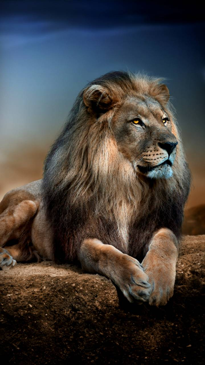 Majestic Lion Wallpaper By Givenchy 29 Free On Zedge