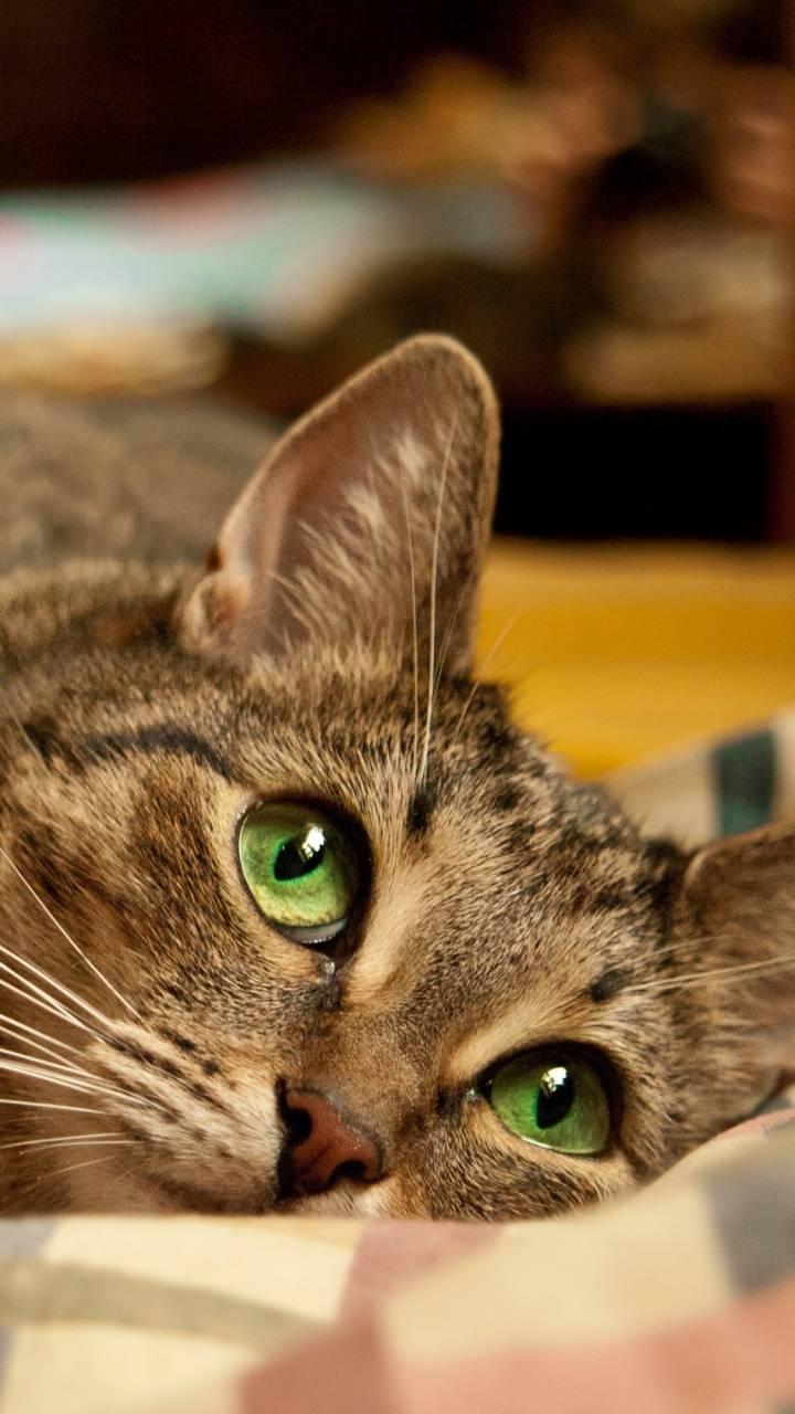 cat face eye
