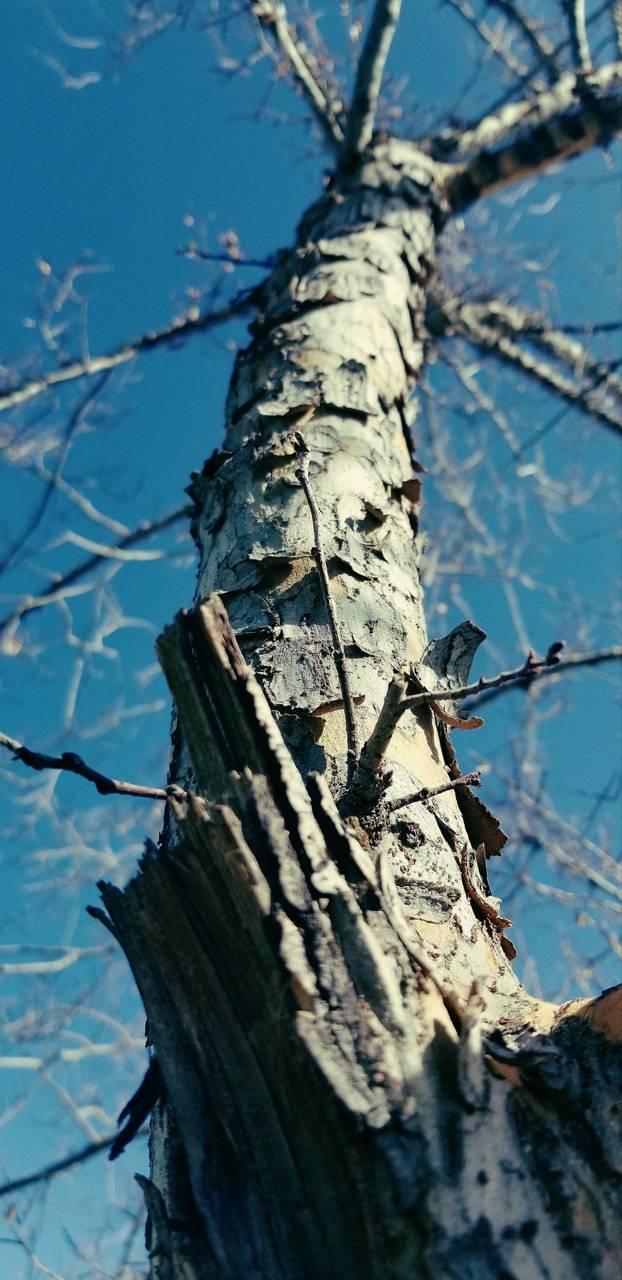 Wooden Heights