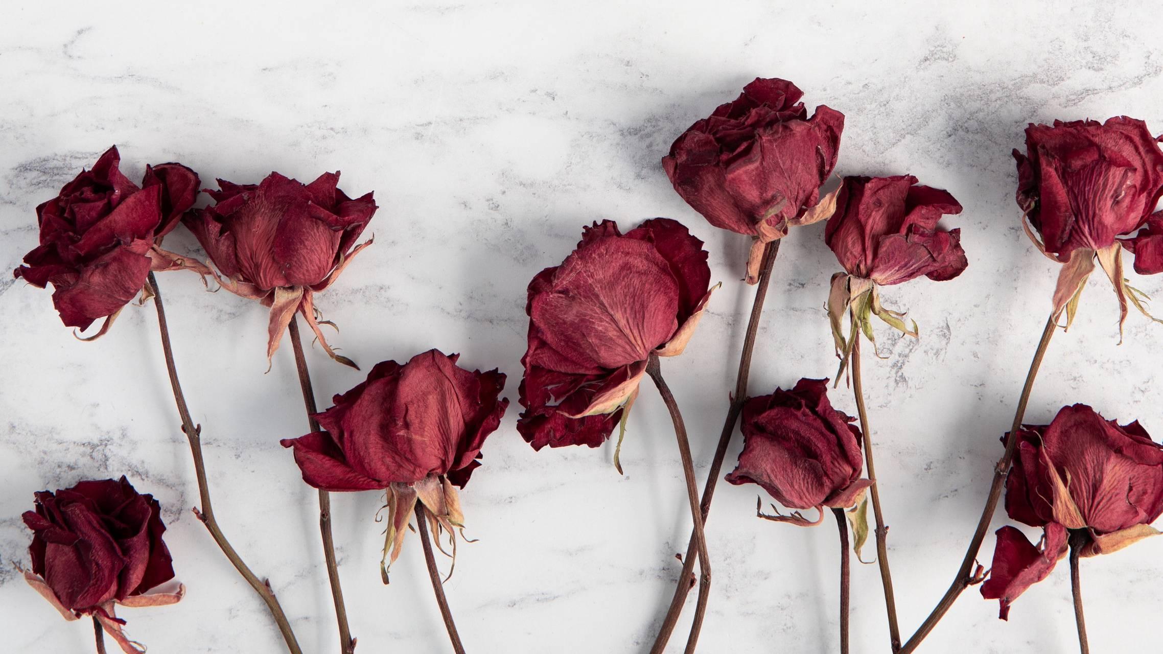 roses beauty