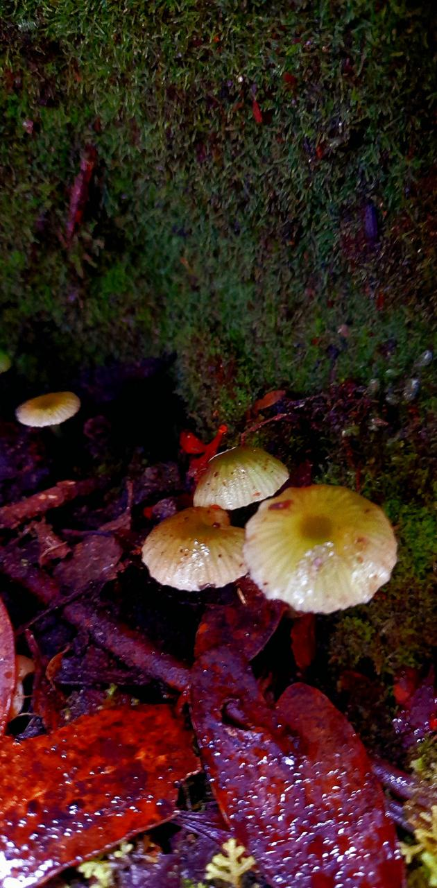 Mossy mushrooms