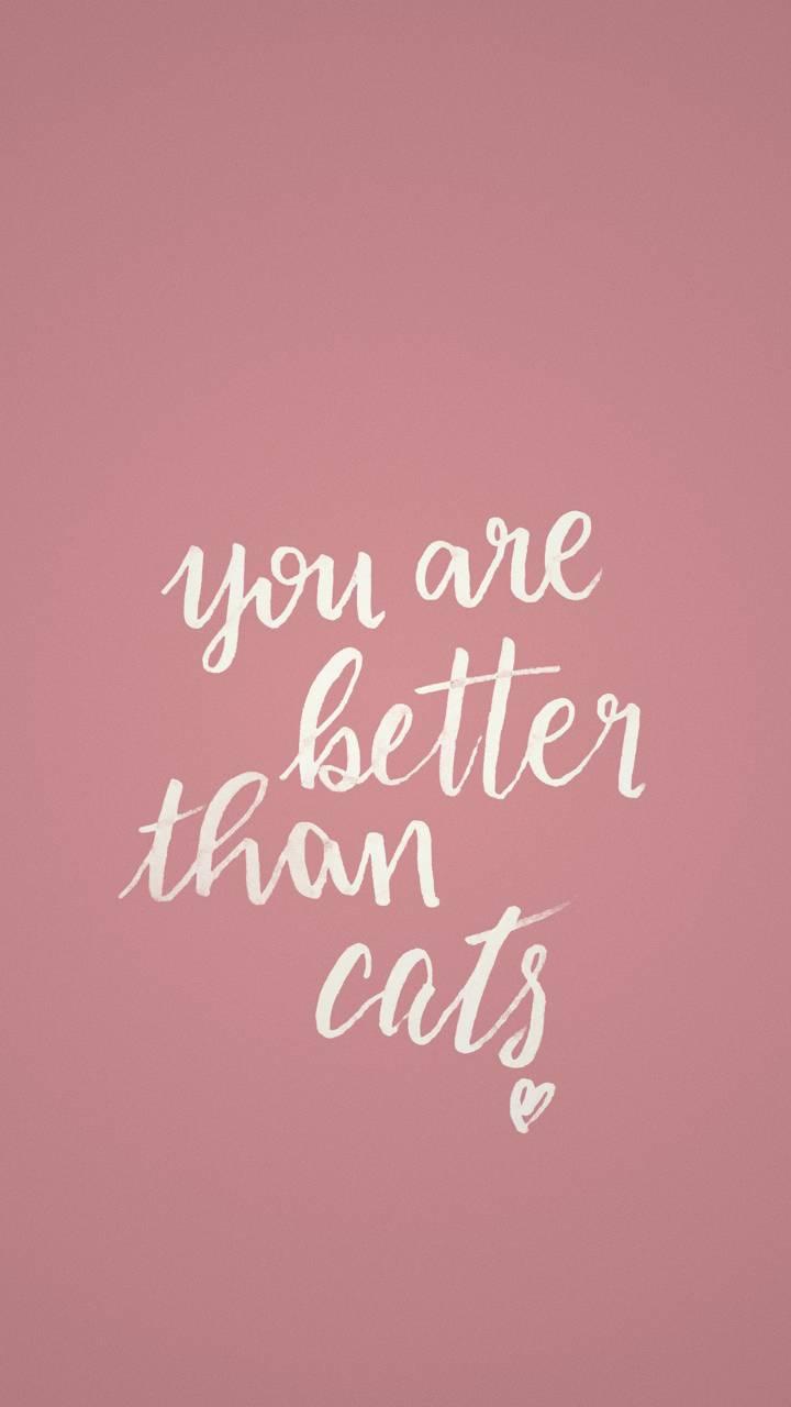 Better Than Cats