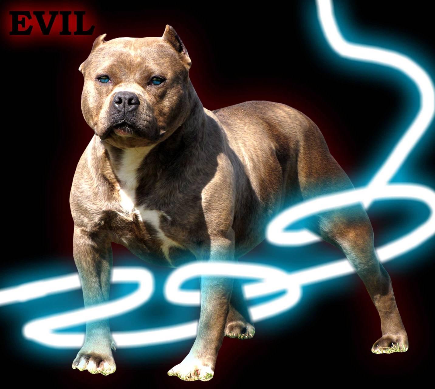 evill