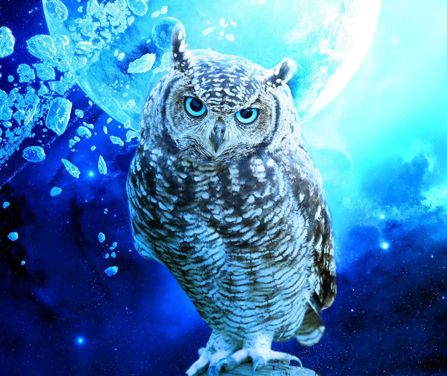 Blue Owl Wallpaper By Agaaa K Da Free On Zedge