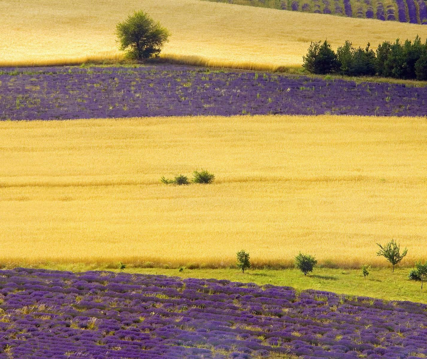 Htc Field View Hd