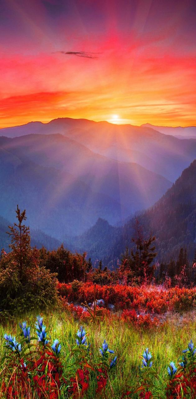view nature