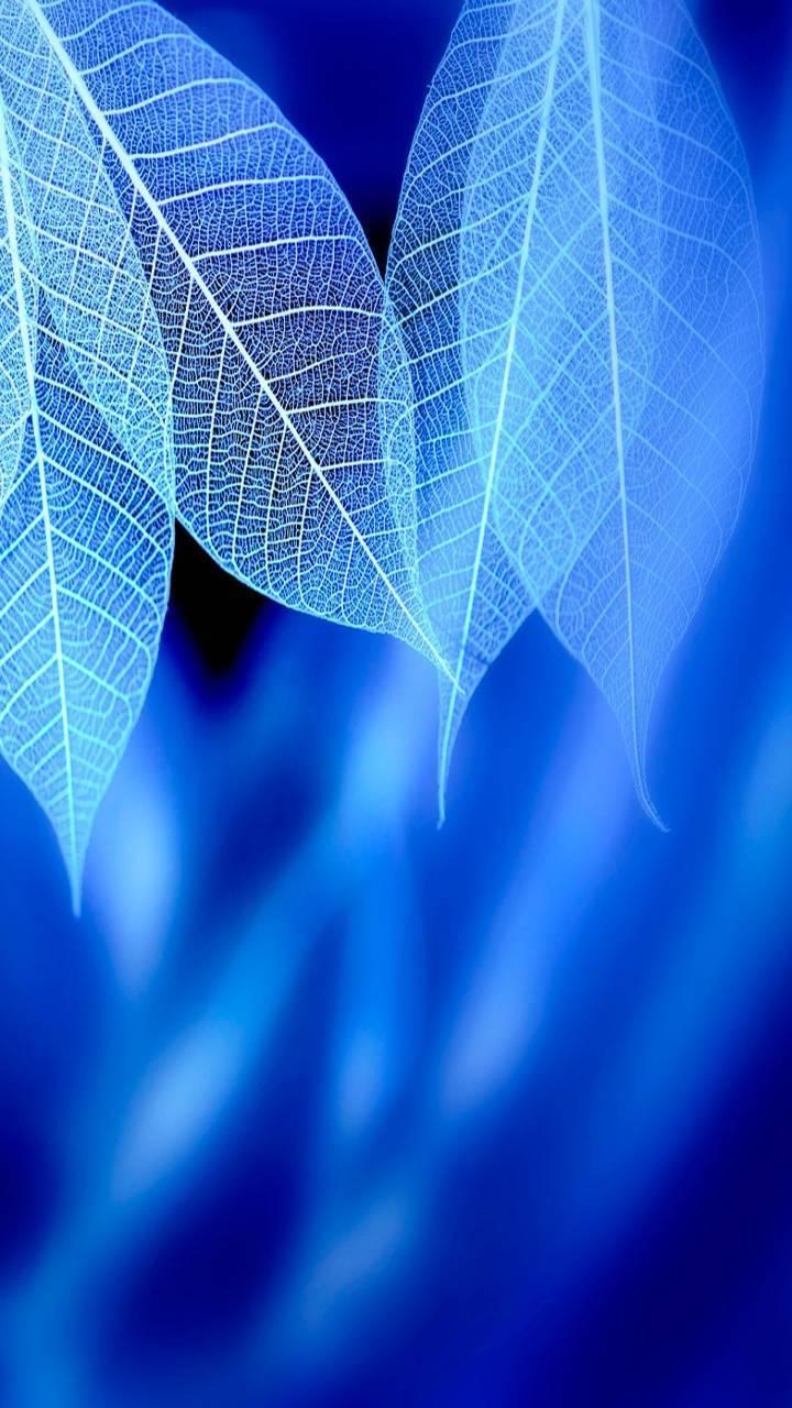 Blue Leave