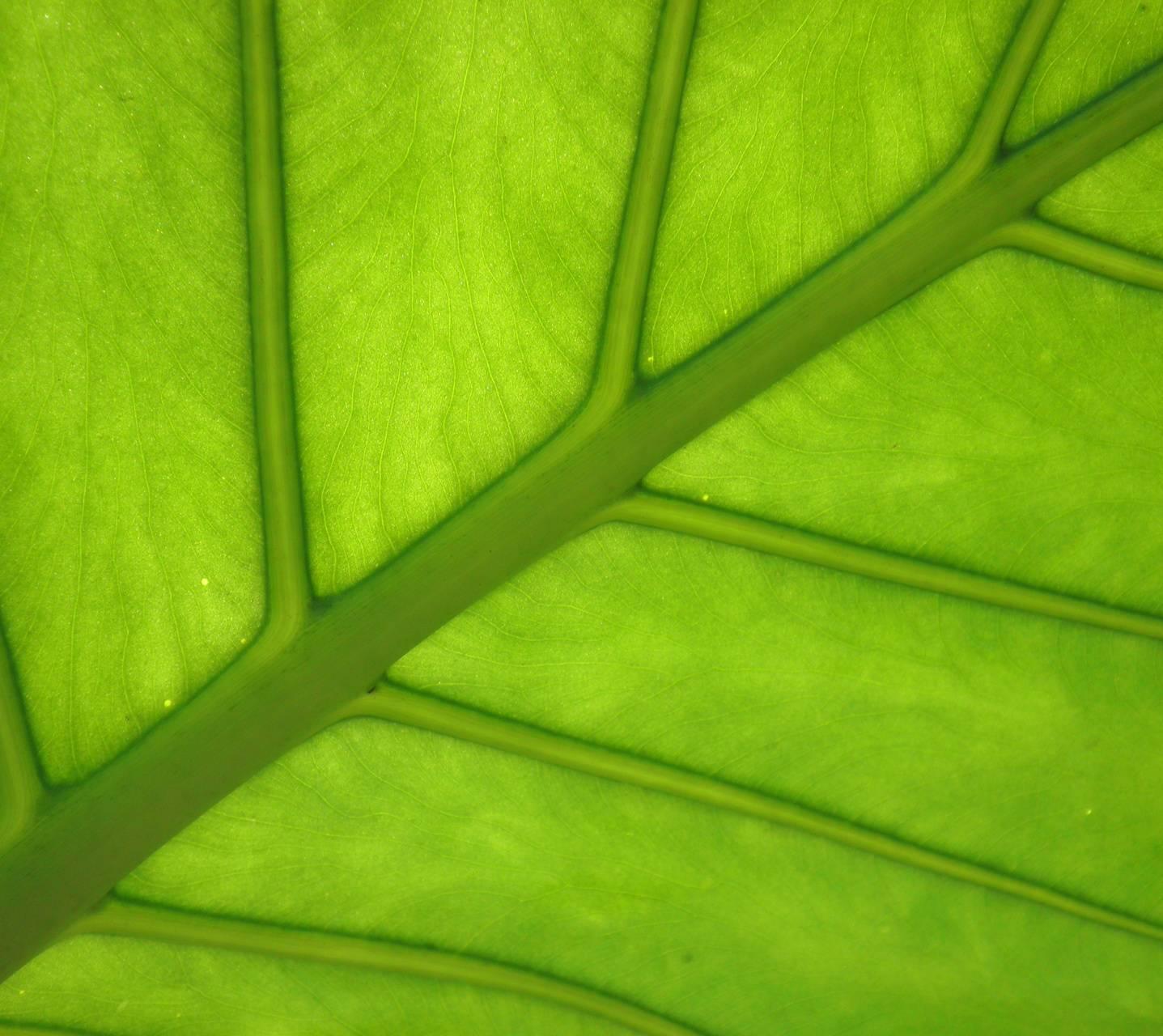Back of a leaf