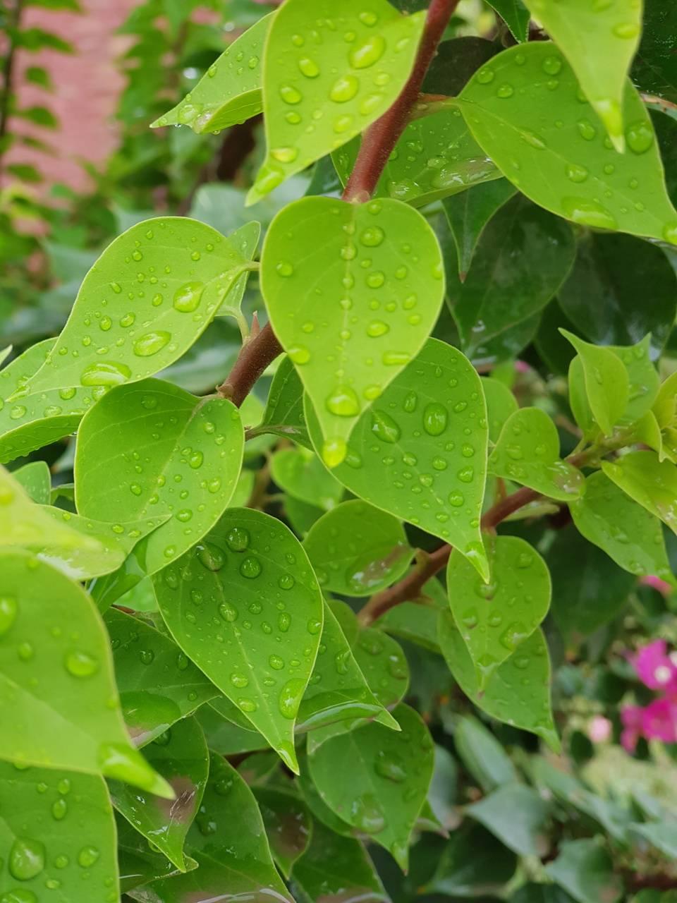 Rain Shower Leaves