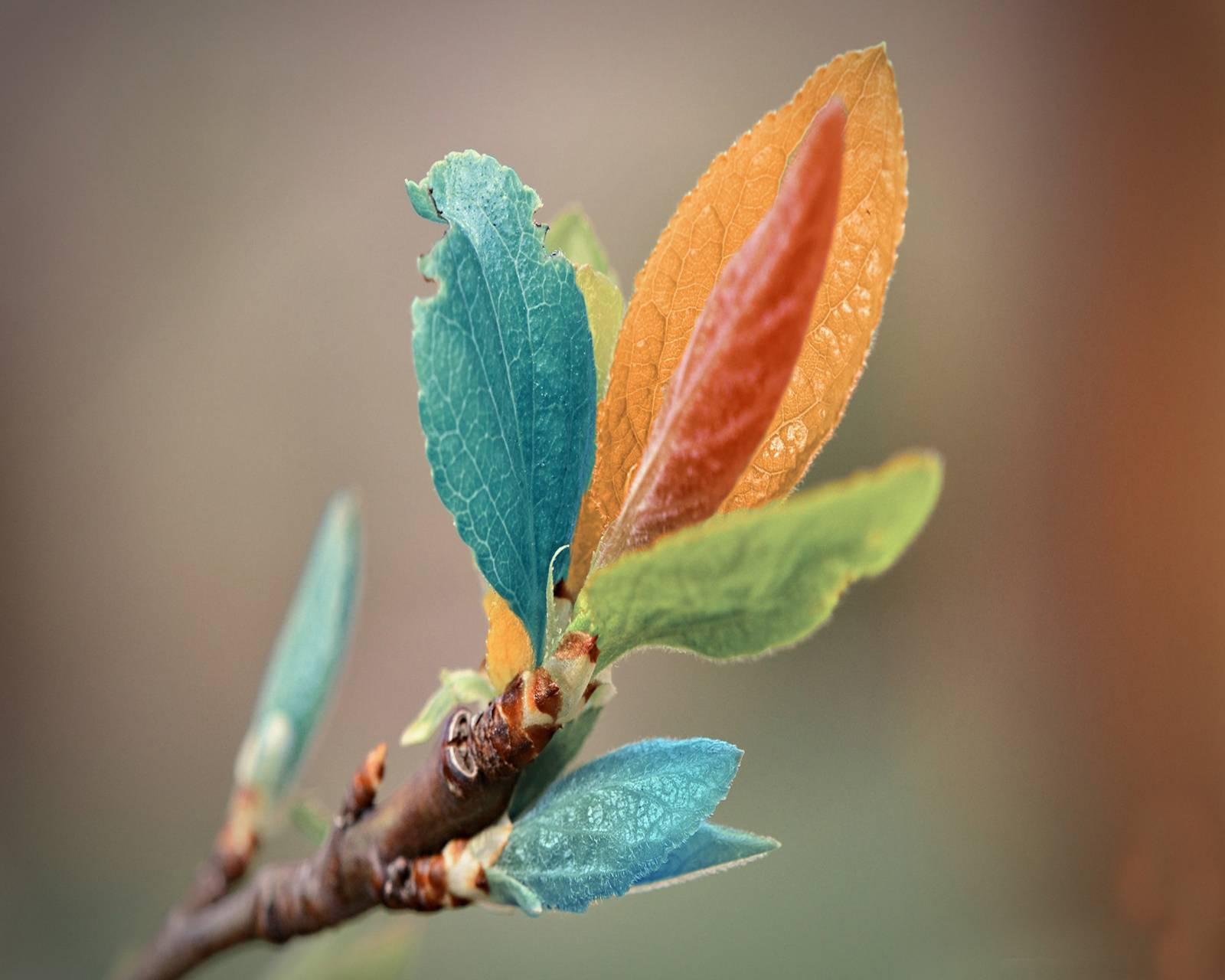 Color Leaf Hd
