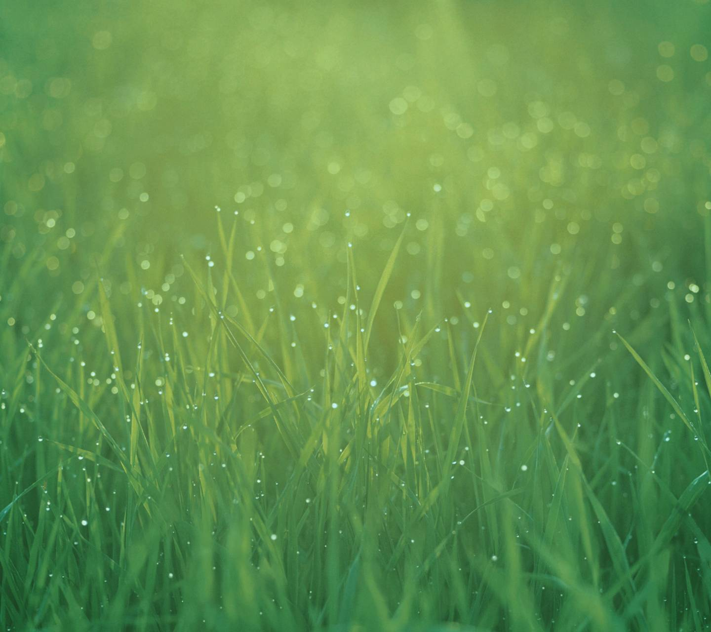 morning grass
