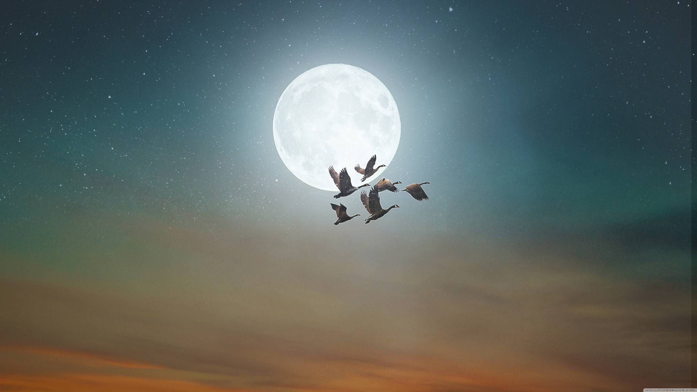 birds fly moon