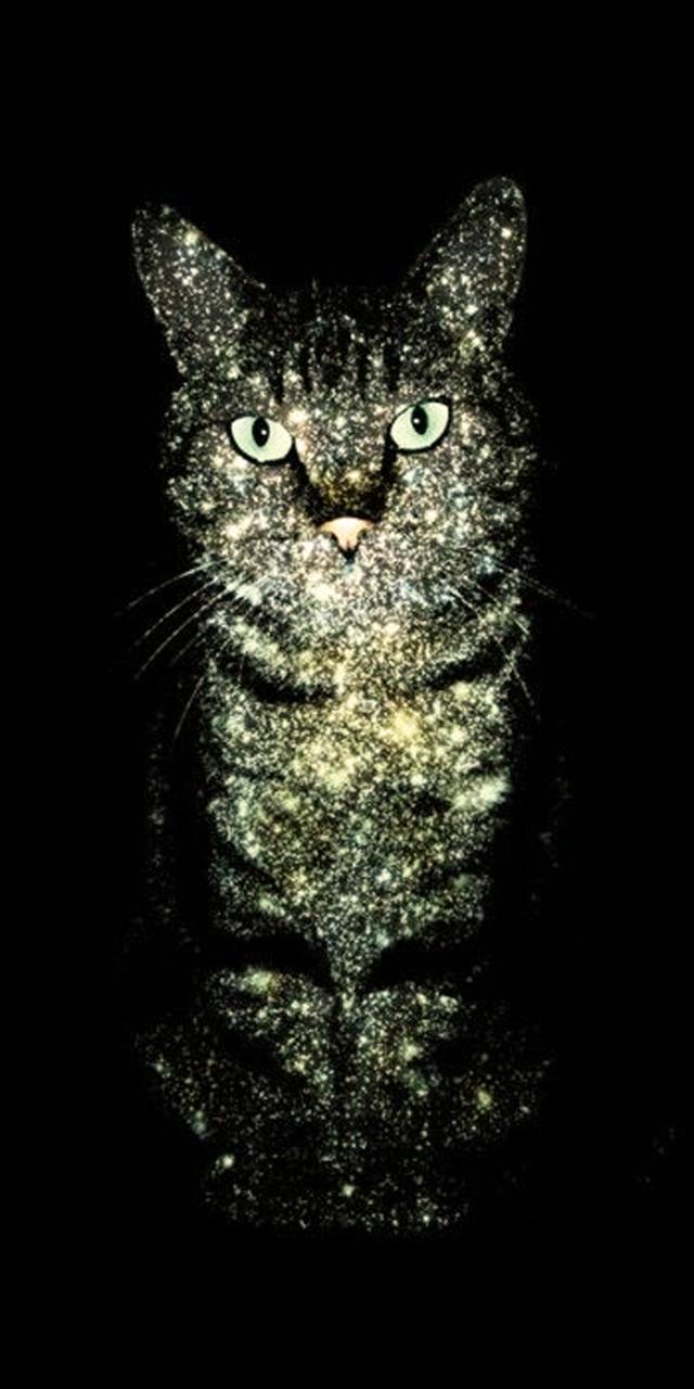 Galaxy Cat Wallpaper By Zomka 32 Free On Zedge