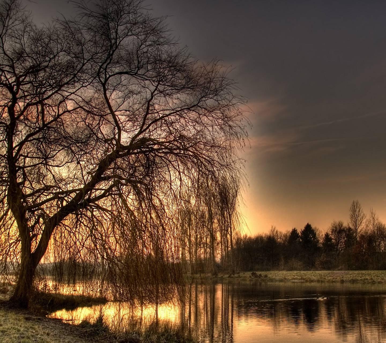 Nature Tree2