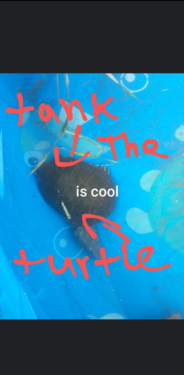 Tank the turtle