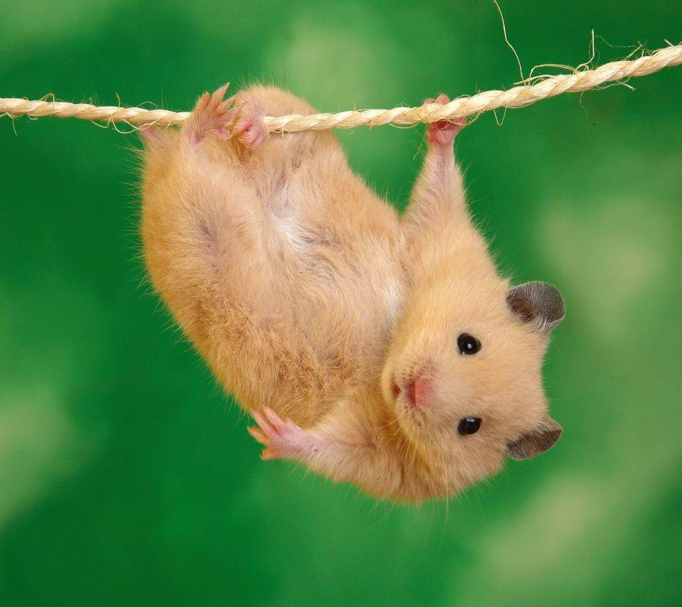 Cute Mouse Hd