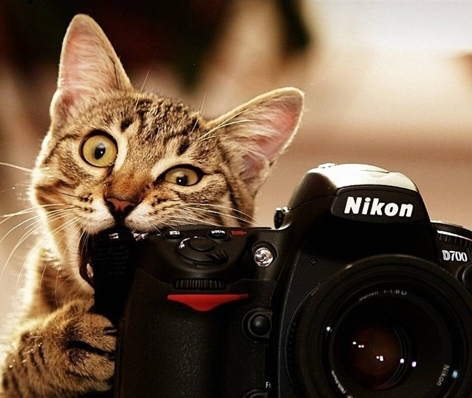 Cats Also Use Camera