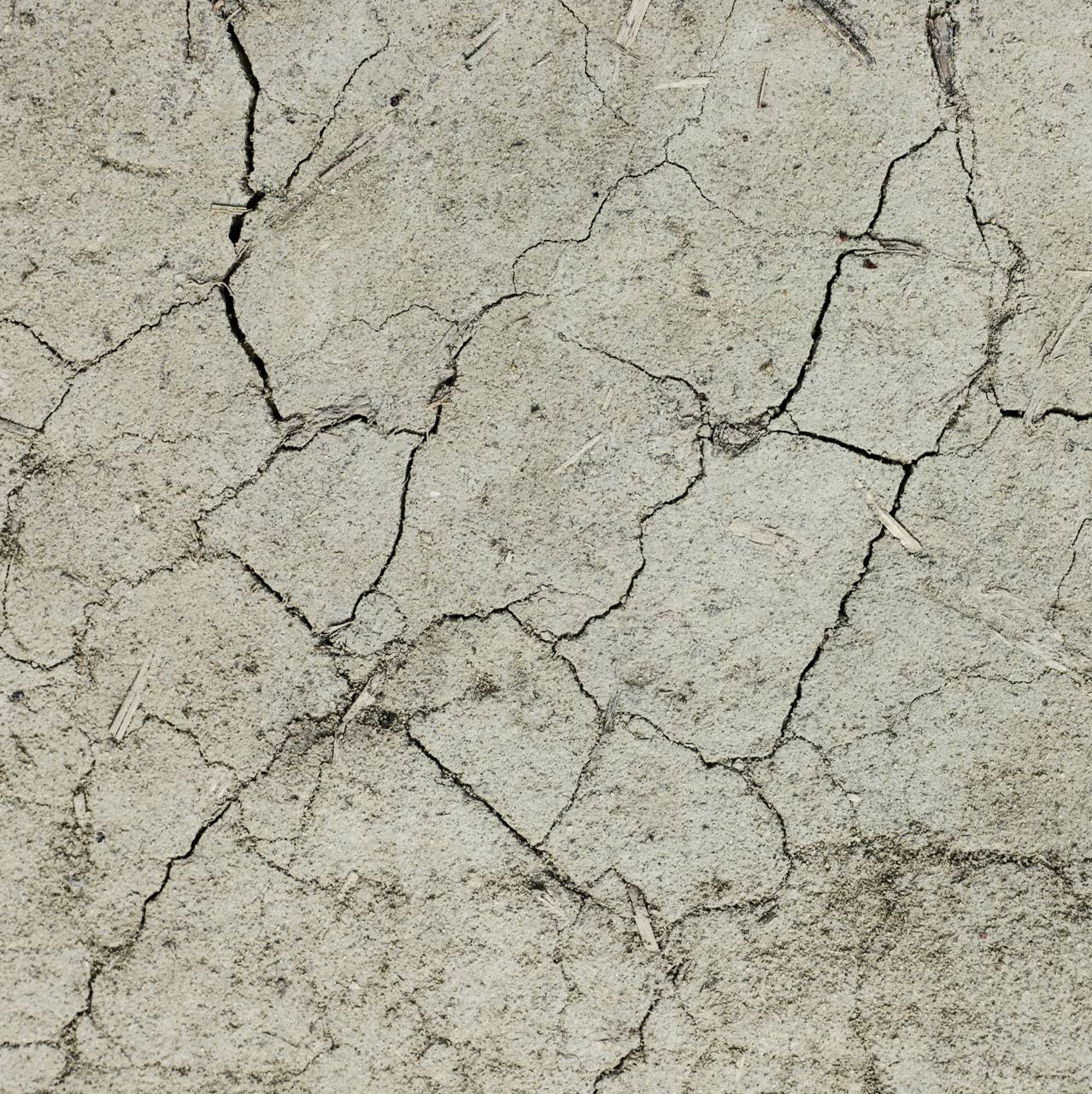 Dried Surface