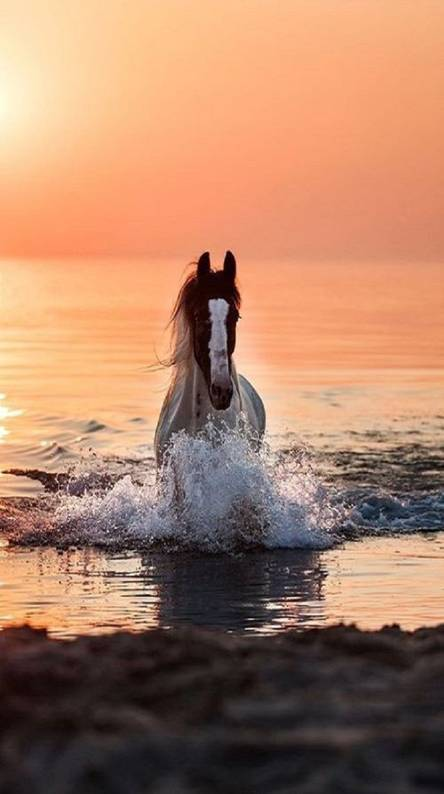 Horse Ringtones And Wallpapers Free By Zedge