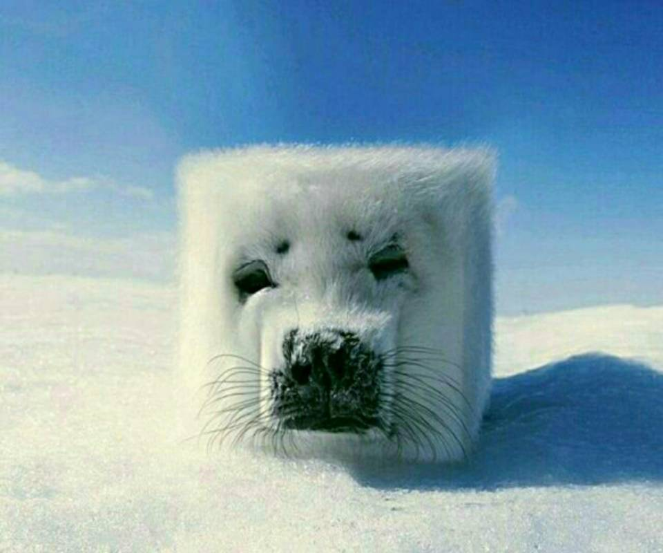 snow face of dog