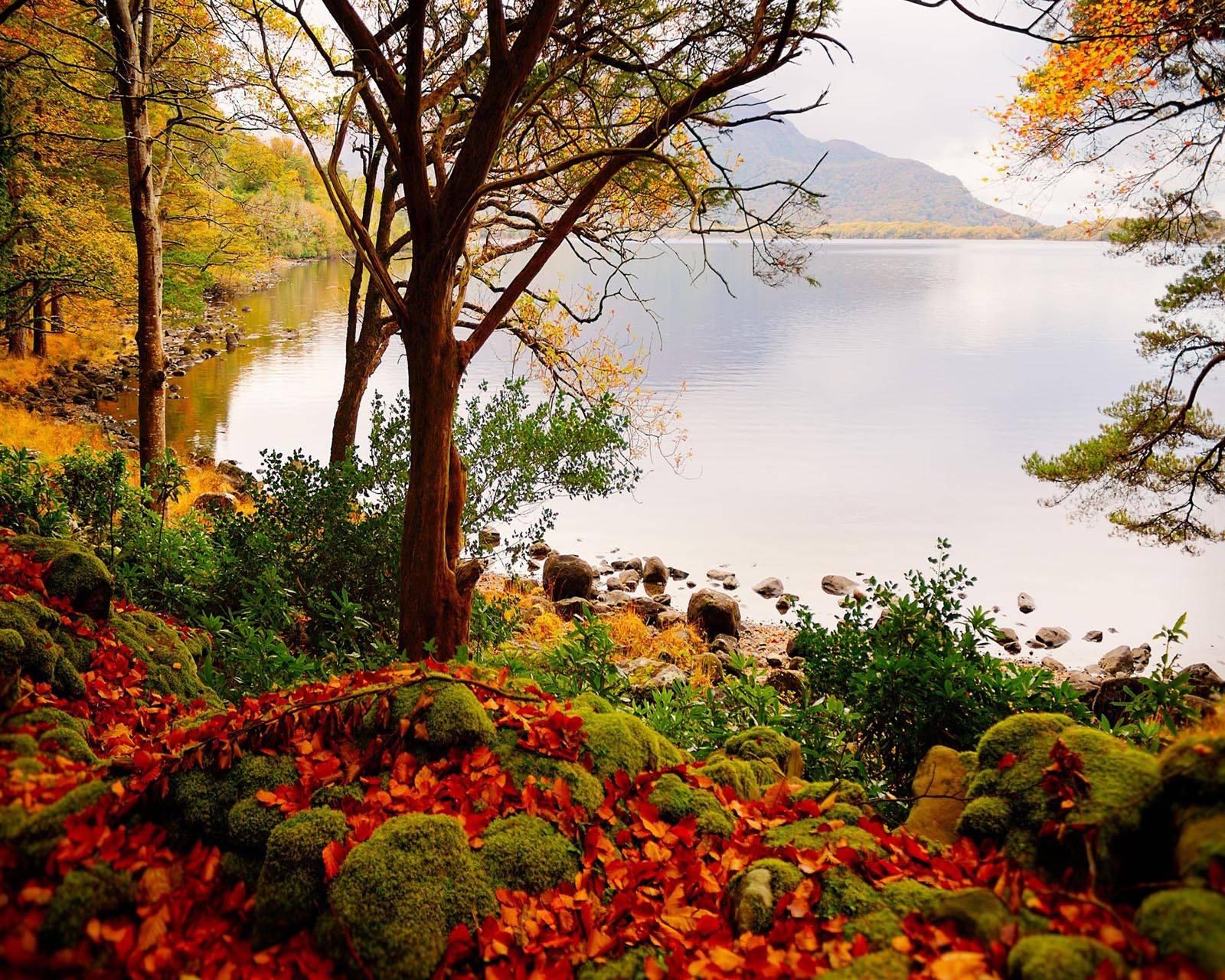 Autumn Lake trees