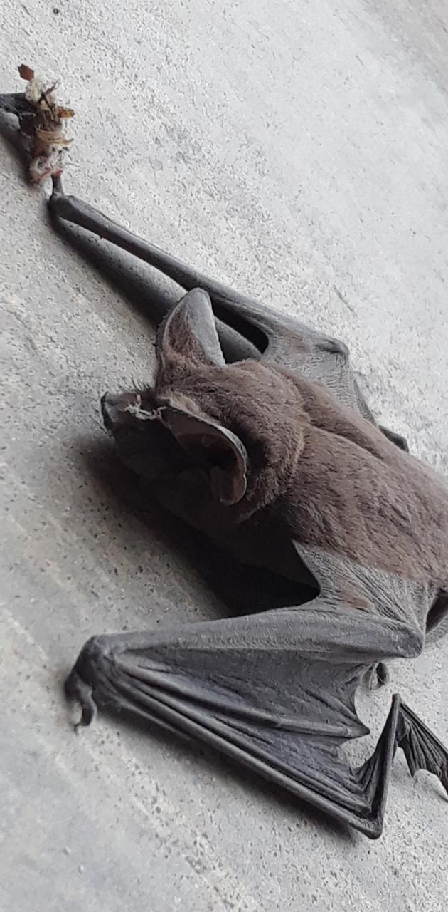 Shop bat