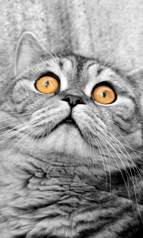 cat zedge