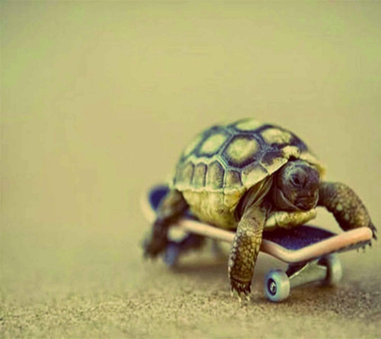 Skate turtle
