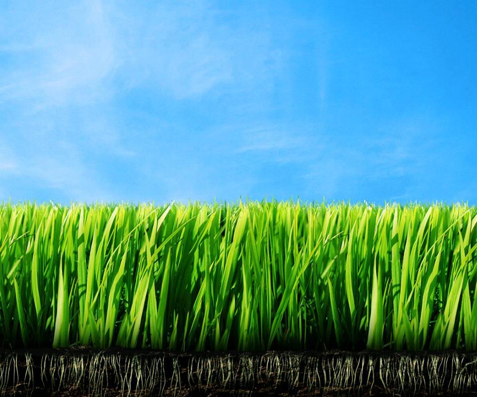 Grassdirtlow