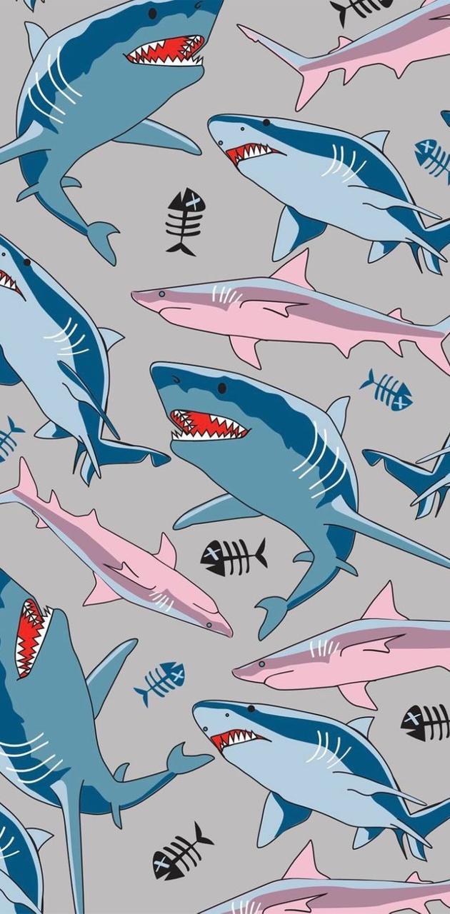 Shark bois