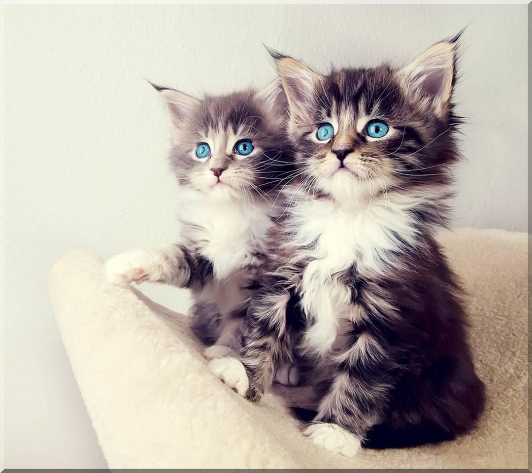 3d-kitten