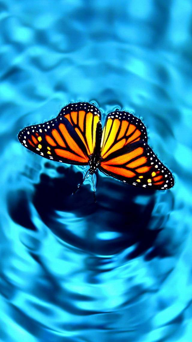 Floating Monarch