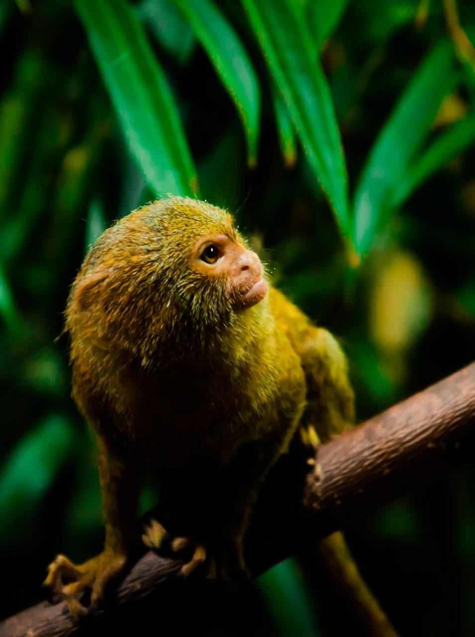Monkey 240x320