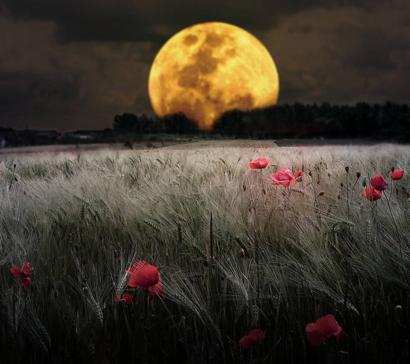 Nature And Moon