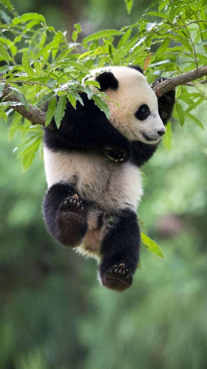 Just Hangin