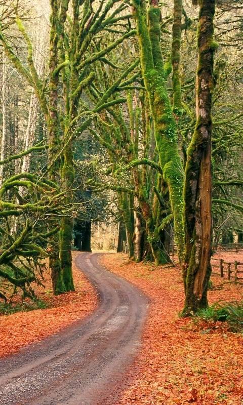 Odd Road