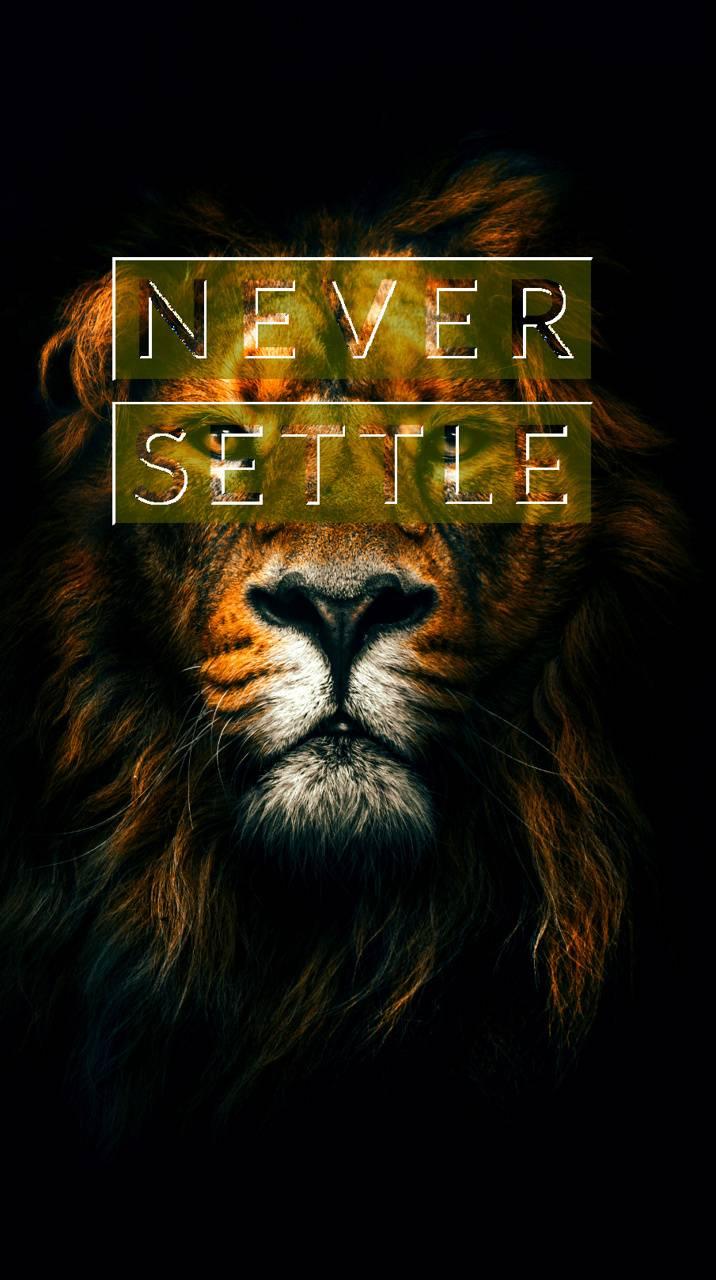 Never Settle Lion
