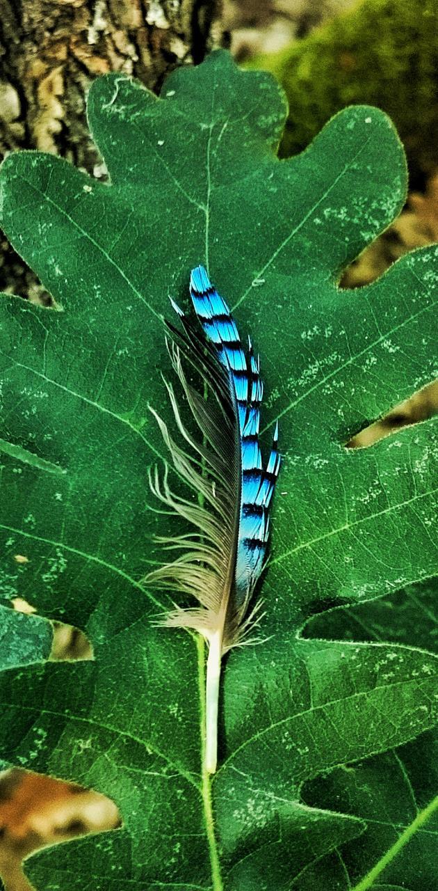 Feather on leaf