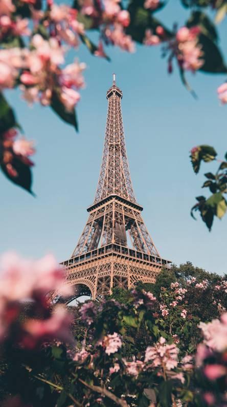 PARIS TOKYO TOWER